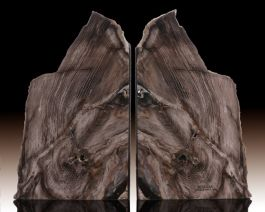 "7.5"" Petrified Sequoia Bookends"