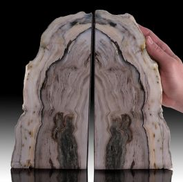 Elegant Petrified Wood Bookends