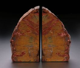 "7.75"" Petrified Wood Bookends"