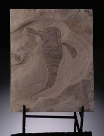 Eurypterus remipes (Sea Scorpion) - New York w/ stand