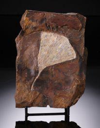 Ginkgo leaf specimen w/ stand