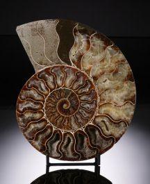 Sliced Magadascar Ammonite with stand