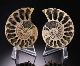 Pyritized Ammonite Pair w/ Stands