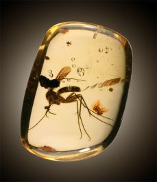 Insect & Arachnid in Amber