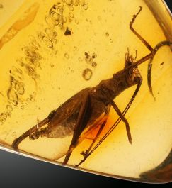 Grasshopper in Amber Time Capsule