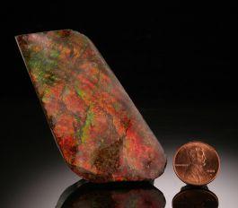 Ammolite Free Form