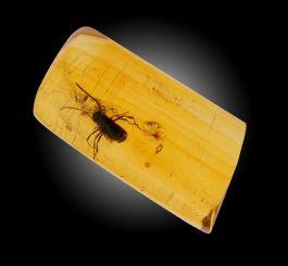 Amber with Bee Specimen
