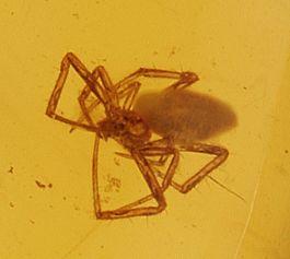 Spider in Amber Capsule