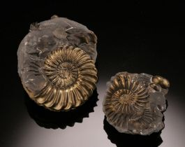 Pyritized Ammonite Pair / Germany