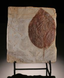 """4-1/2"""" Fossil Leaf Plate (with stand)"""