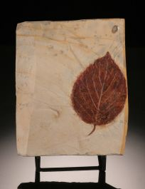 """4"""" Fossil Leaf Plate (with stand)"""