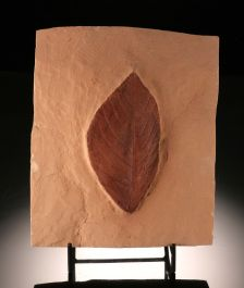 Hickory Leaf Plate (with stand)