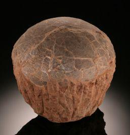 Hadrosaur Egg