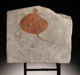 "4-1/4"" Fossil Leaf (with stand)"