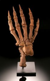 Cave Bear Paw (with stand)