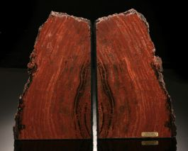 "7-1/2"" Conifer Petrified Wood Bookends"