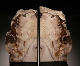 Cypress Petrified Wood Bookends