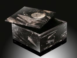 Square Ammonite Box (Best Available)