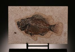 Priscacara Fish Plate (with stand)