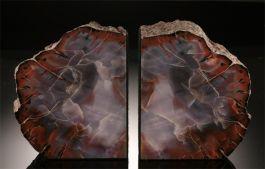 Arizona Petrified Wood Bookends