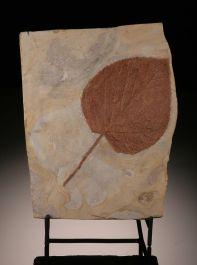 Davidia Antiqua Leaf (with stand)
