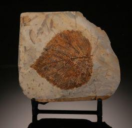 Single Davidia Antiqua Leaf (with stand)