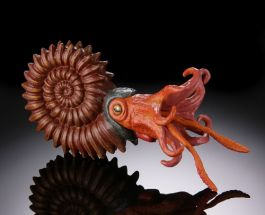 Ammonite by Safari