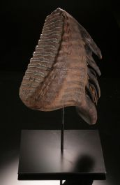 Woolly Mammoth Tooth- Mammuthus primigenius