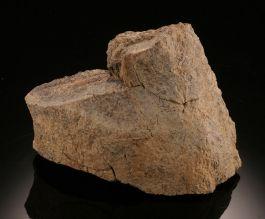 Tyrannosaurus Rex Bone Fragment