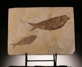 Double Fish Plate (with stand)