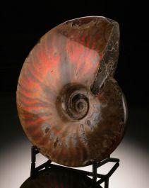 Iridescent Ammonite (with stand)
