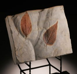 Double Leaf Plate (with stand)