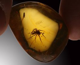 Amber with LARGE Spider Inclusion!