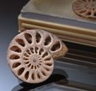 Boxed Pair of Ammonites