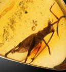 Grasshopper in Amber Time Capsule